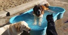 Hugos Dog Park