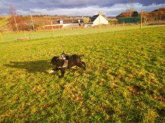 Blairgowrie Dog Park