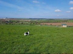 Chapel Farms Secure Dog Paddock