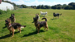 Dog Walking & Exercise Field Newquay (Private Hire)