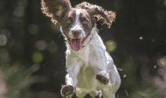 Hope Rescue - Secure dog training paddock