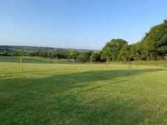 TJ's Green Field