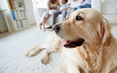 How to keep your dog happy and healthy in the Coronavirus lockdown