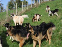 The Fairydogmother Field