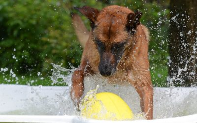 How to keep your dog cool during lockdown