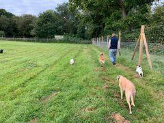 Thornwell Secure Dog Walking