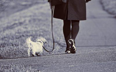 Dog advice during coronavirus lockdown