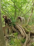 Hollin Wood
