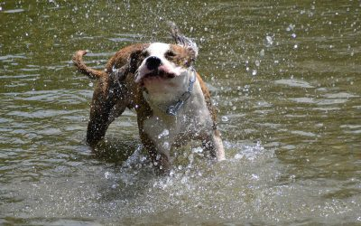 Keeping Cool Tips from PDSA