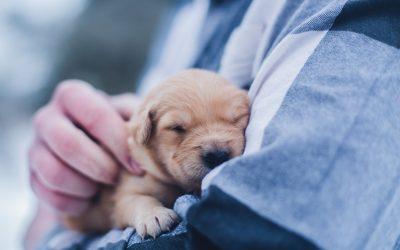 Bedfordshire dog kennels thefts: Woman arrested after animals stolen