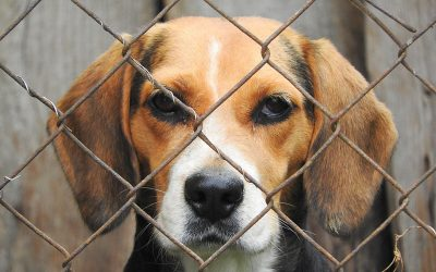 Hundreds of pets are being abandoned as owners who bought them for company during pandemic struggle to cope with caring for them